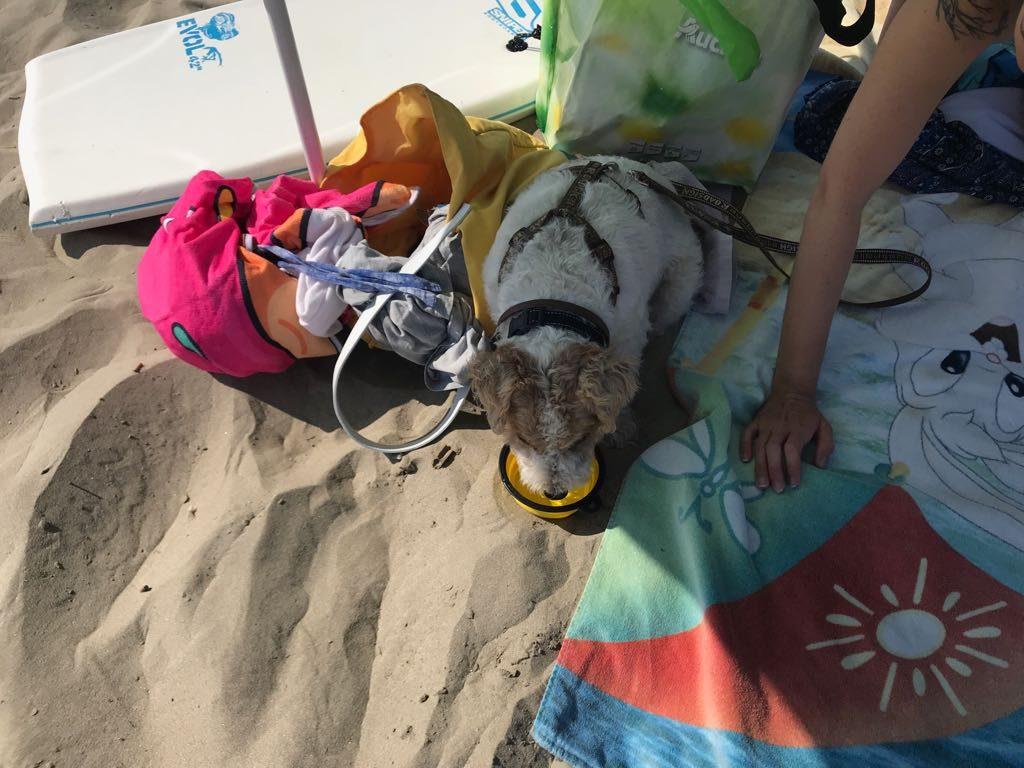 indispensables objets connectés pour votre chien high tech en vacances à la plage - Idroid chien vacances plage 14 1024x768 - [TECH] Indispensables objets connectés pour votre chien High tech en vacances à la plage - idroid.fr