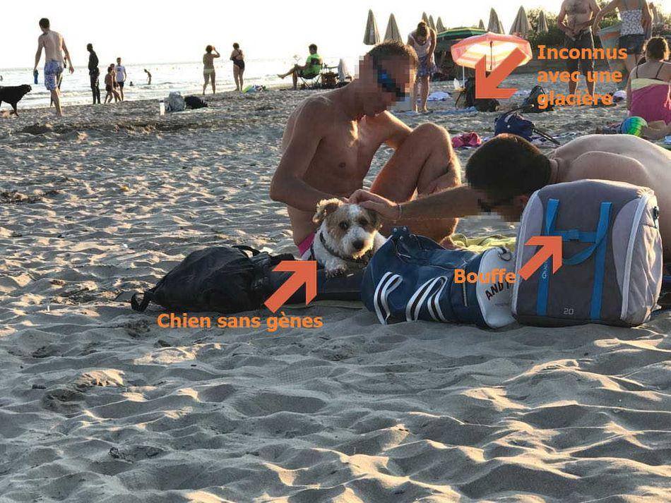 indispensables objets connectés pour votre chien high tech en vacances à la plage - Idroid chien vacances plage 17 - [TECH] Indispensables objets connectés pour votre chien High tech en vacances à la plage - idroid.fr
