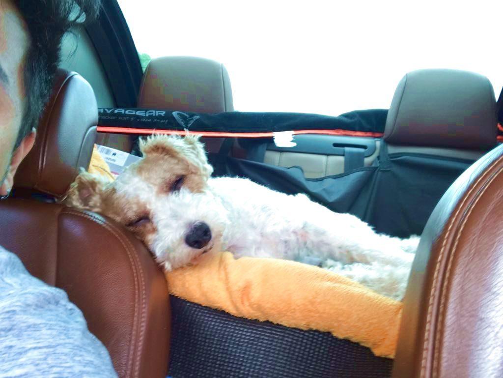 indispensables objets connectés pour votre chien high tech en vacances à la plage - Idroid chien vacances plage 19 1024x769 - [TECH] Indispensables objets connectés pour votre chien High tech en vacances à la plage - idroid.fr