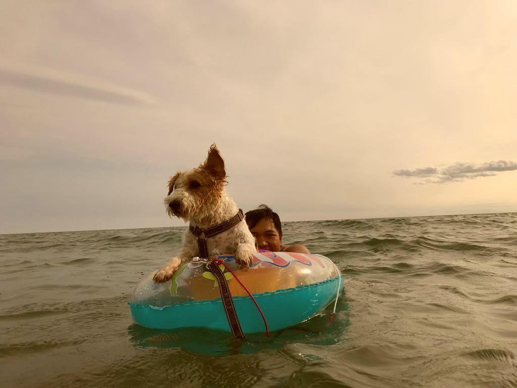 indispensables objets connectés pour votre chien high tech en vacances à la plage - Idroid chien vacances plage 7 1024x768 - [TECH] Indispensables objets connectés pour votre chien High tech en vacances à la plage - idroid.fr