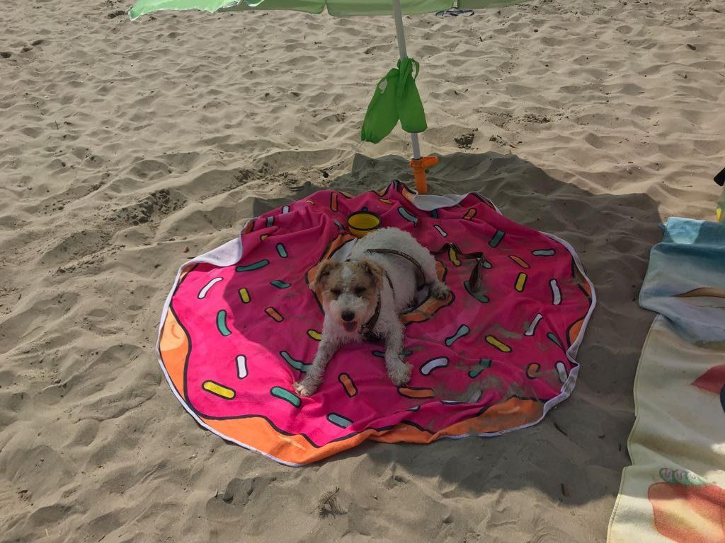 indispensables objets connectés pour votre chien high tech en vacances à la plage - Idroid chien vacances plage 9 1024x768 - [TECH] Indispensables objets connectés pour votre chien High tech en vacances à la plage - idroid.fr
