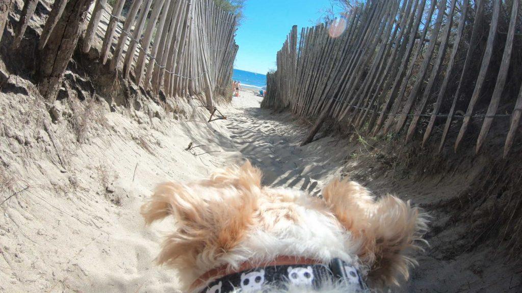 indispensables objets connectés pour votre chien high tech en vacances à la plage - Idroid chien vacances plage gopro6 1024x576 - [TECH] Indispensables objets connectés pour votre chien High tech en vacances à la plage - idroid.fr