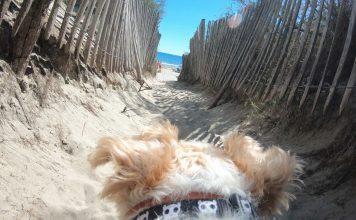 home - Idroid chien vacances plage gopro6 356x220 - HOME - idroid.fr