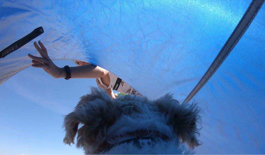 indispensables objets connectés pour votre chien high tech en vacances à la plage - Idroid chien vacances plage tente 1024x601 - [TECH] Indispensables objets connectés pour votre chien High tech en vacances à la plage - idroid.fr